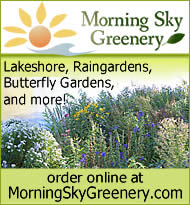 Morning Sky Greenery - Native Prairie Plants