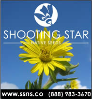 Shooting Star Native Seeds - Native Prairie Grass and Wildflower Seeds