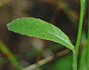 [photo of upper leaves]