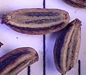 [photo of seeds]