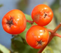 [photo of fruit]